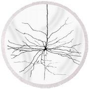 Pyramidal Cell In Cerebral Cortex, Cajal Round Beach Towel