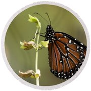 Round Beach Towel featuring the photograph Queen Butterfly by Meg Rousher