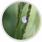 Snail On Grass Round Beach Towel