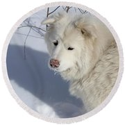 Round Beach Towel featuring the photograph Snowy Nose by Fiona Kennard