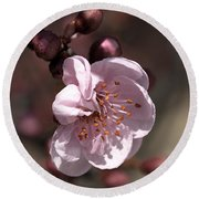 Round Beach Towel featuring the photograph Spring Blossom by Joy Watson