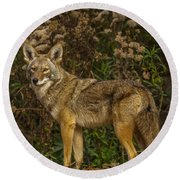 The Coyote Round Beach Towel