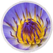 Round Beach Towel featuring the photograph The Lotus Flower by Sharon Mau
