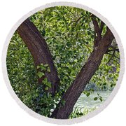 Round Beach Towel featuring the photograph Tree At Stow Lake by Kate Brown