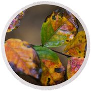 Turning Leaves Round Beach Towel by Stephen Anderson