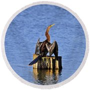 Wet Wings Round Beach Towel by Al Powell Photography USA