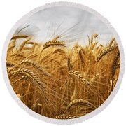 Wheat Round Beach Towel by Elena Elisseeva