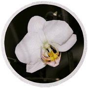 Round Beach Towel featuring the photograph White Orchid by Sherman Perry