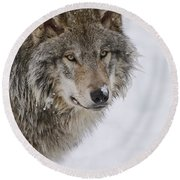 Timber Wolf Pictures Round Beach Towel