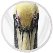 Brown Pelican-2 Round Beach Towel
