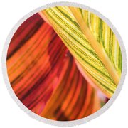 Canna Lily Named Durban Round Beach Towel by J McCombie