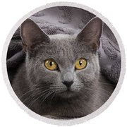 Chartreux Cat Round Beach Towel