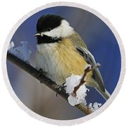 Winter Chickadee... Round Beach Towel