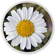 Round Beach Towel featuring the photograph Daisy Flower by George Atsametakis