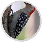 Round Beach Towel featuring the photograph Red Bellied Woodpecker  by Meg Rousher