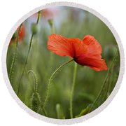 Red Poppy Flowers Round Beach Towel