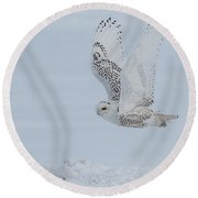 Round Beach Towel featuring the photograph Snowy Owl #3/3 by Patti Deters