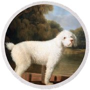 Stubbs' White Poodle In A Punt Round Beach Towel by Cora Wandel
