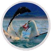 Wandering Albatross Round Beach Towel by Amanda Stadther
