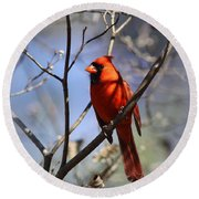 3477-006- Northern Cardinal Round Beach Towel