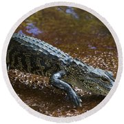 American Alligator Round Beach Towel by Mark Newman