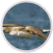 Blue-footed Booby Round Beach Towel by William H. Mullins