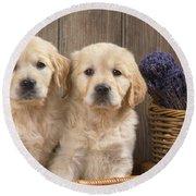 Golden Retriever Puppies Round Beach Towel