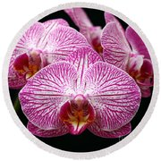 Moth Orchid Round Beach Towel by James Brunker