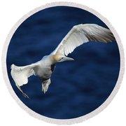 Northern Gannet In Flight Round Beach Towel