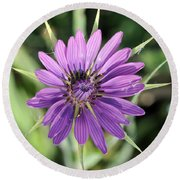 Round Beach Towel featuring the photograph Salsify Flower by George Atsametakis