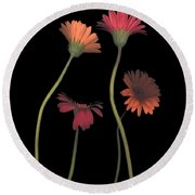 4daisies On Stems Round Beach Towel