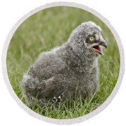 Baby Snowy Owl Round Beach Towel by JT Lewis