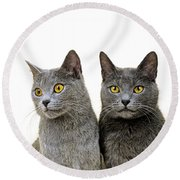 Chartreux Round Beach Towel