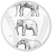 Elephant Evolution, Artwork Round Beach Towel