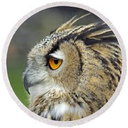 European Eagle Owl Round Beach Towel