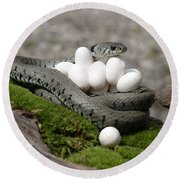 Grass Snake With Eggs Round Beach Towel