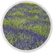 Lavendar Field Rows Of White And Purple Flowers Round Beach Towel