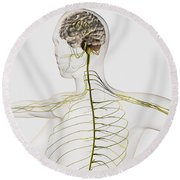 Medical Illustration Of The Human Round Beach Towel