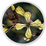 Round Beach Towel featuring the photograph Spring Wild Flower by George Atsametakis