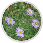 6 Asters Left Round Beach Towel