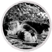 6 Toe Cat At Hemingway House Round Beach Towel by John McGraw
