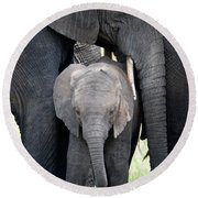 Round Beach Towel featuring the photograph African Elephant Loxodonta Africana by Panoramic Images