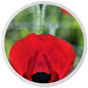 Round Beach Towel featuring the photograph Poppy Flower by George Atsametakis