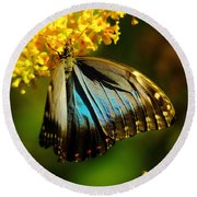 A Beautiful Butterfly Round Beach Towel