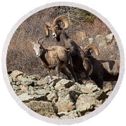A Bighorn Coupling Round Beach Towel by Jim Garrison