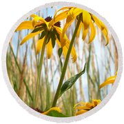 A Black Eye Susan Summer Round Beach Towel