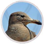 A Brown Gull In Profile Round Beach Towel by Susan Wiedmann
