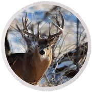 A Buck In The Bush Round Beach Towel by Jim Garrison