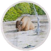 A Buffalo Sits In Yellowstone Round Beach Towel by Michele Myers