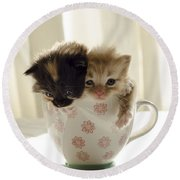 A Cup Of Cuteness Round Beach Towel by Spikey Mouse Photography